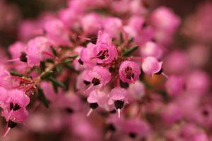 お花(名前忘れました…)